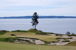 The lone tree at No. 15 at Chambers Bay, site of 2015 U.S. Open